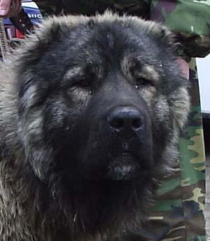 Vladimir central prison dogs